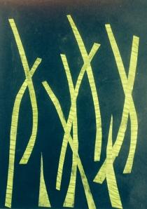 640_flower stems on black background